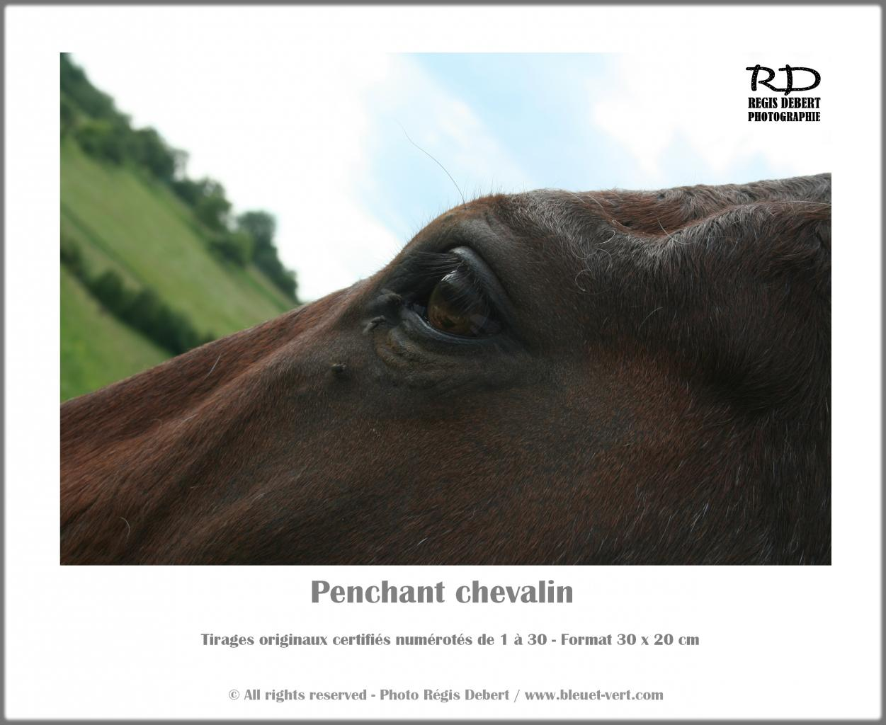 Penchant chevalin